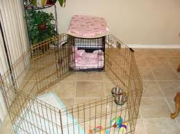 House Training Crate Shih Tzus By Elaine